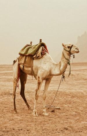 silk road uzbekistan tour Adras Travel
